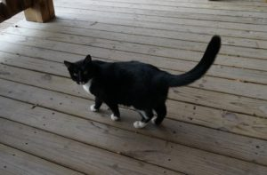 This is Winerycat, she hangs out on the porch and greets winedrinkers. She'll greet you too!