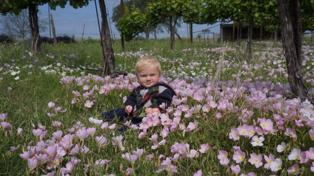 picture of baby in vineyard surrounded by pink flowers